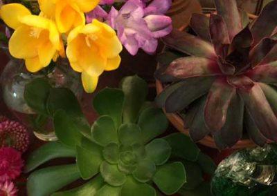 flower/succulent combo